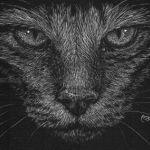 ali_cat
