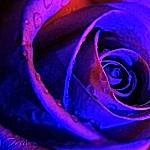 ViolettaVox