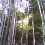 hazelgreen