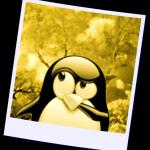 pinguinoerrante