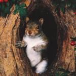 TheMadSquirrel